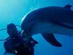 Diving with dolfins